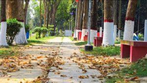 রাবি করোনা